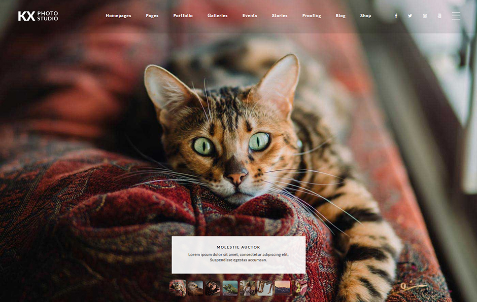 Kinatrix User Friendly Portfolio Theme WordPress
